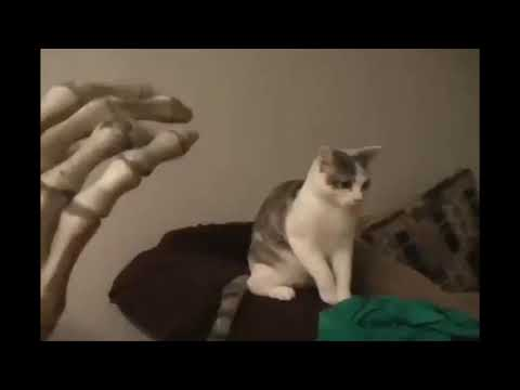 Cats Hissing compilation