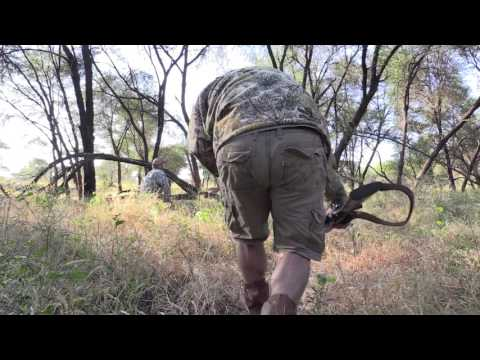 Limpopo Bushbuck Hunt