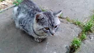 Как будет ПРИВЕТ по кошачьи?