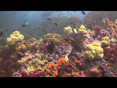 Soft Corals of Raja Ampat