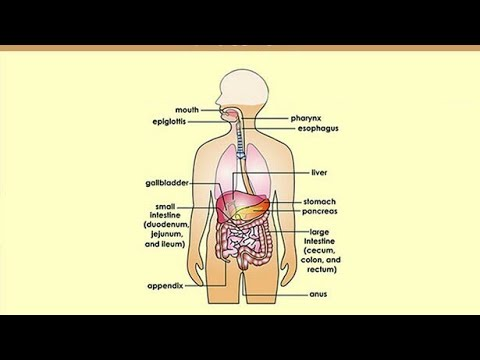 How To Drawing Human Digestive System Very Easy Youtube