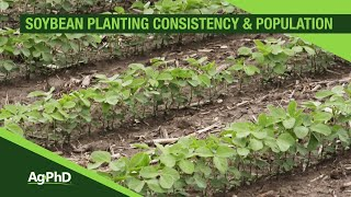 soybean planting population and consistency from ag phd 1093 air date 3 17 19