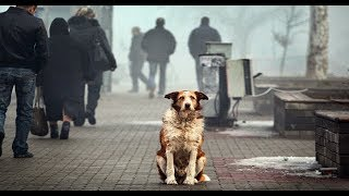 Бездомные животные!   Социальный ролик. Бродячие собаки 2019 Питомник Социальная реклама