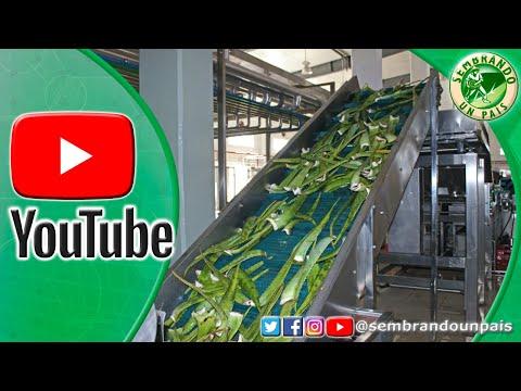 🏭🍃Procesamiento Industrial Del Aloe Vera O Sábila. Parte#2🍃🏭