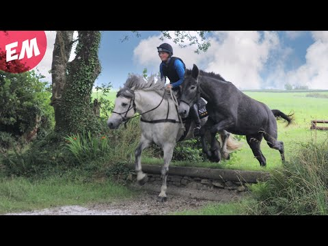 Mule tries XC schooling for the first time