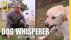 Showdown with Holly | Dog Whisperer