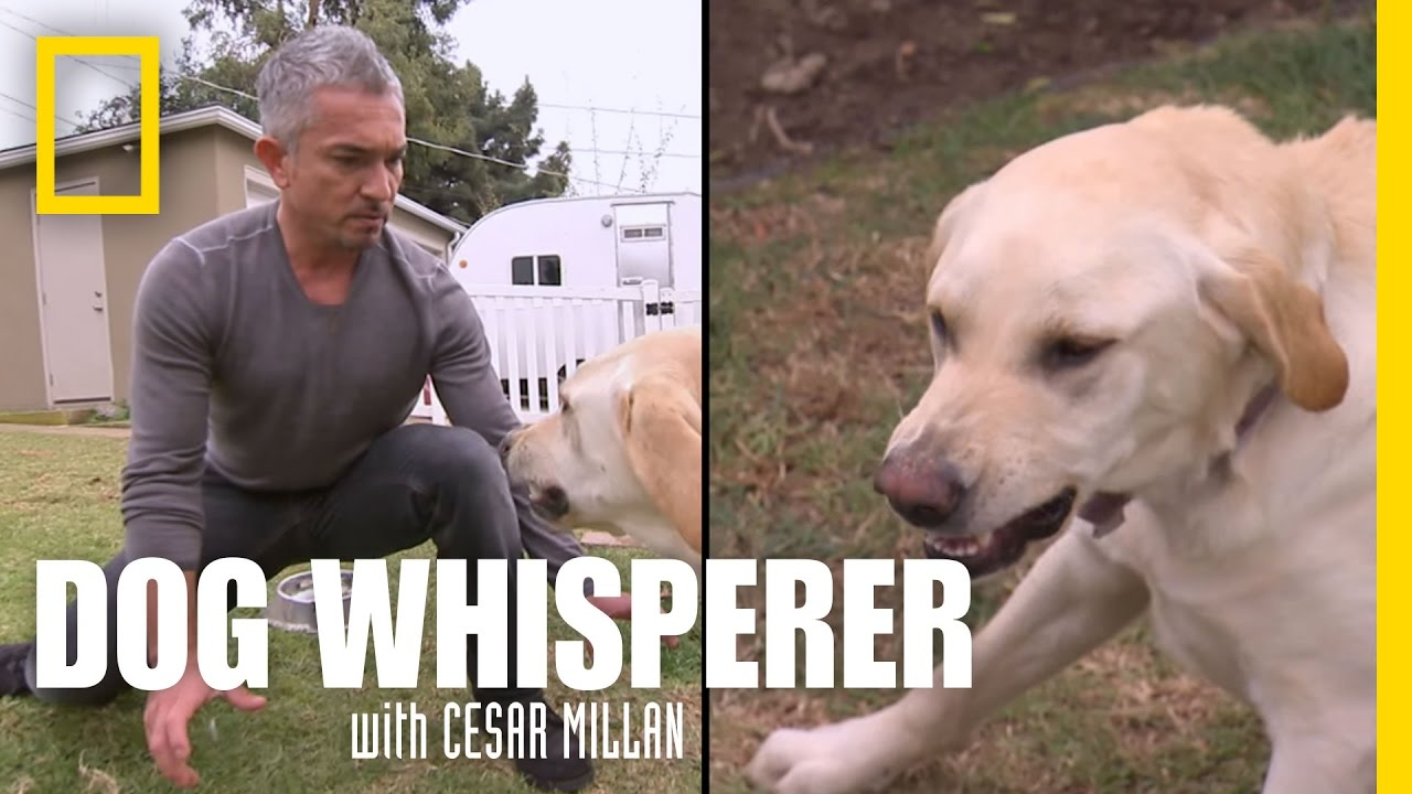 maxresdefault showdown with holly dog whisperer youtube