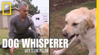 While dealing with Holly's food aggression, Cesar gets bitten on th...