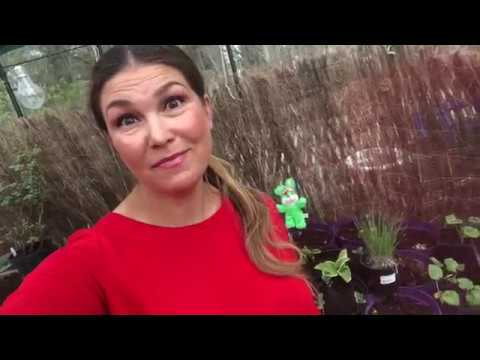 Frostvakt utan el -3 knep för att skydda växterna i växthus eller odlingstunnel Jessica Lyon visar