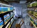 Fish Room Tour - A Great Basement Fish Room
