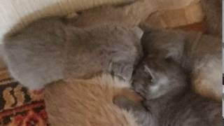 Ксюша с котятами нам 1 месяц кошка кошка и котята