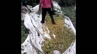 Uso do soprador para limpar café no pano Video de Fernando Barbosa