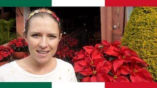 The LUXURIOUS Side of Cuernavaca, Morelos 🇲🇽