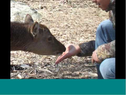 Green Chimneys Farm and Wildlife Center  Animal Assisted Interventions That Benefit Both Humans and