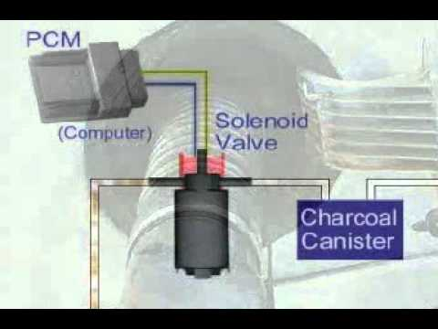 1999 Dodge Caravan Wiring Diagram Hair Follicle Skin Fuel Vapor Canister Solenoid - Youtube
