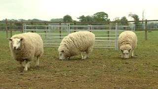 Big Barn Farm Episode 1 | You Can't Teach a New Dog Old Tricks