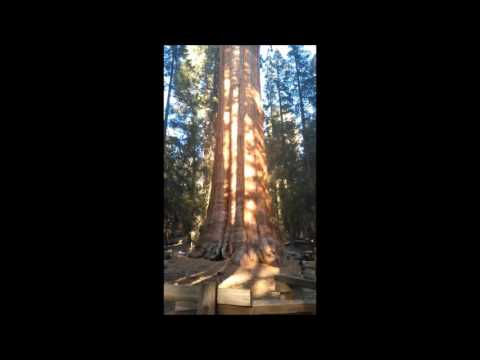General Sherman Tree - Sequoia National Forest