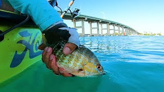 Smorgasboard Day Catching a Variety of Random Fish - Ft Pierce Florida
