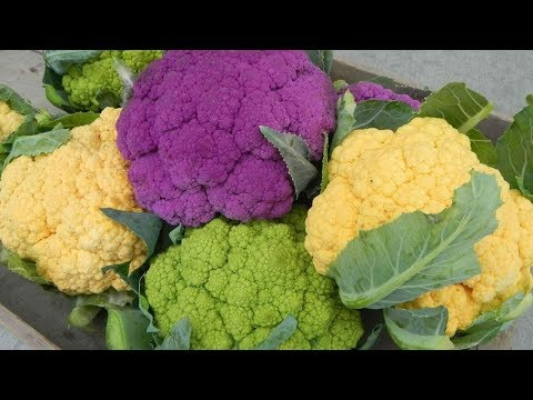 Вопрос: Почему выросли мелкие головки цветной капусты?