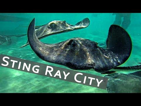 TRAVEL || Stingray City | Grand Cayman