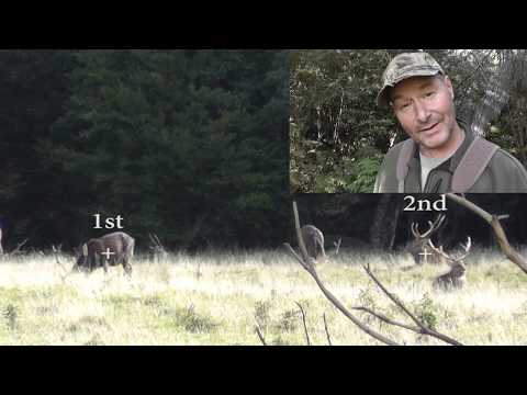 13pt Sika Stag & Double Drop Tine Sika Stag Taken By Happy Hunters