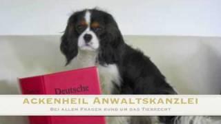 Tierrecht Mainz Ackenheil Anwaltskanzlei Tier Und Recht