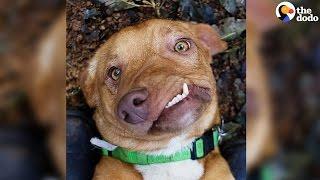 Dog Has Most Adorable Smile   The Dodo