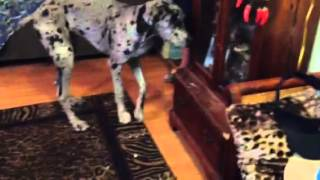 Tampa Dog Training: In Home Dog Training