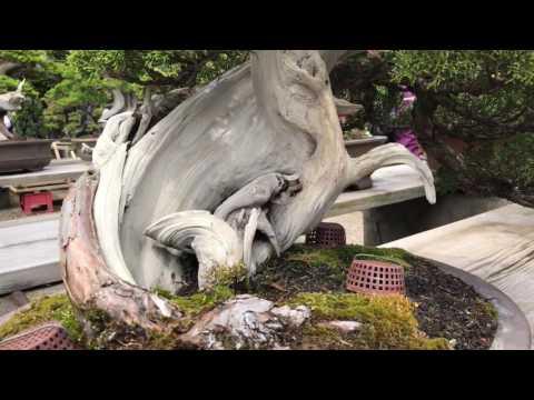 The bonsai garden of Masahiko Kimura
