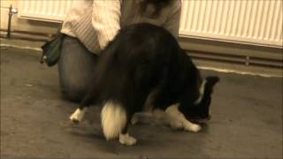 Teach Your Dog To Bow Using Positive Reinforcement Methods