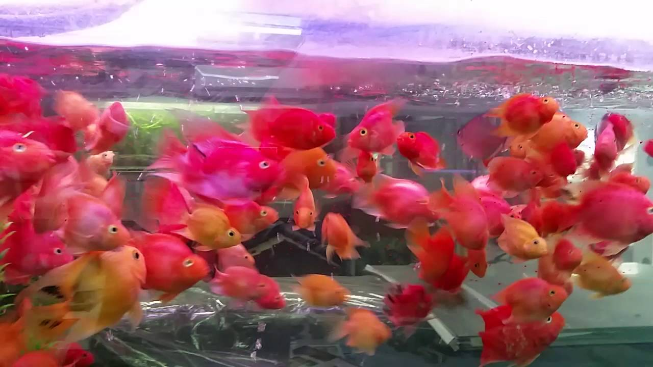 TASTY BITS.. Just look how active and healthy our fish are - YouTube