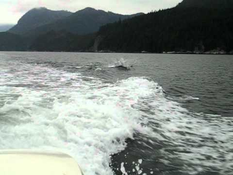 West Canada, Telegraph Cove, Dolphins 2