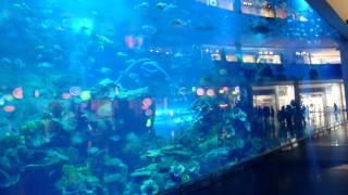 Аквариум,Дубай(Видео с всех уголочков мира., 2015-03-14T01:28:29.000Z)