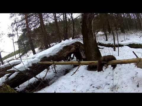 Охота на снегоходе.