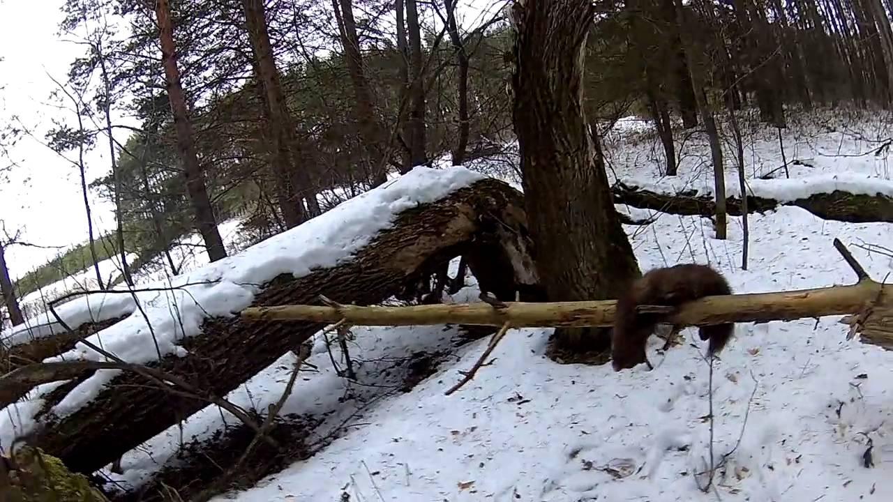 Ютуб охота на снегоходе фото 724-738