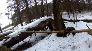 Охота на снегоходе.(Охота, проверка капканов. Путишествие на снегоходе Тайга., 2015-12-09T00:38:45.000Z)