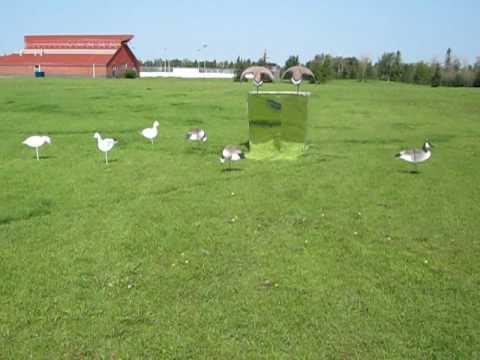Mirror Goose Blind Youtube