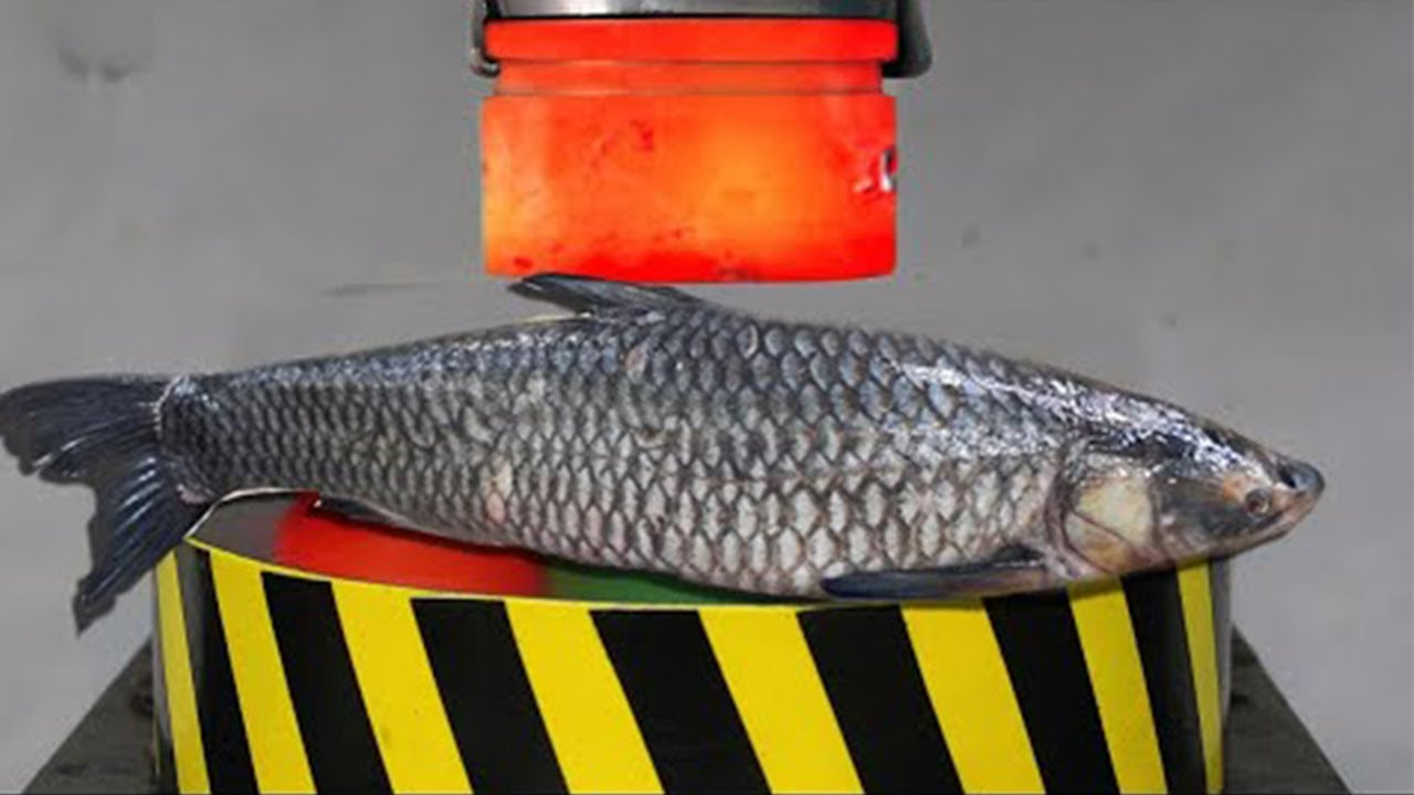 Creative Cutting Fish -Automatic Fish Killing   #fish #clean Fish