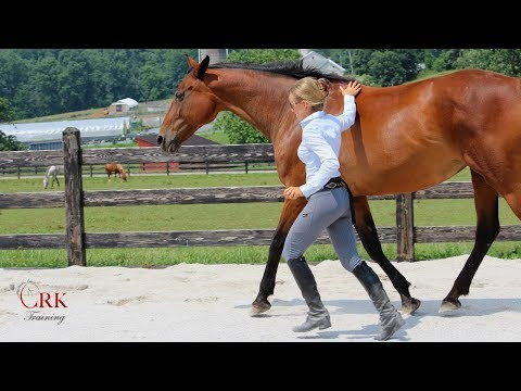 How Do You Make the Most Out of the Time with Your Horse?