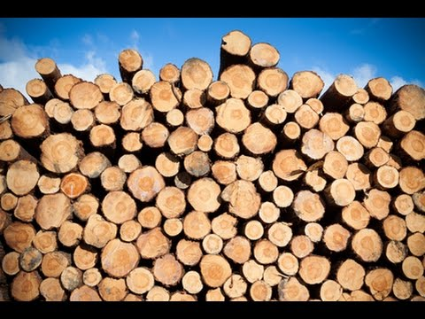 Clique e veja o vídeo Uso da Madeira de Eucalipto na Fazenda - Durabilidade