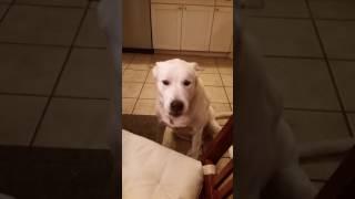 Właścicielka mówi do psa, że pora spać. Czworonóg w zabawny sposób manifestuje swój sprzeciw