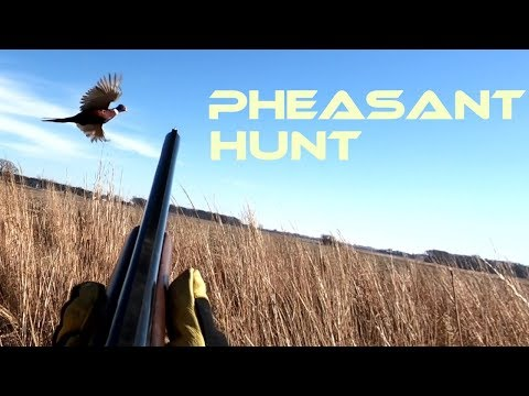 Pheasant Hunting Hunt Club 2