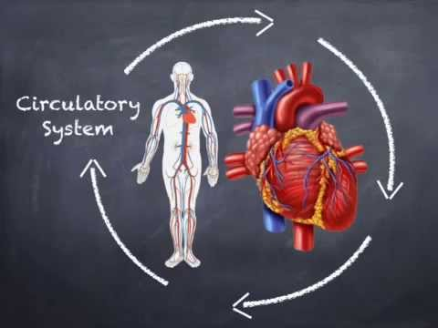 An Introduction To The Human Body Systems For 7th Gr Youtube
