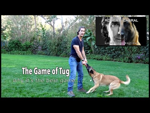 The Game of Tug - Robert Cabral Dog Training #11