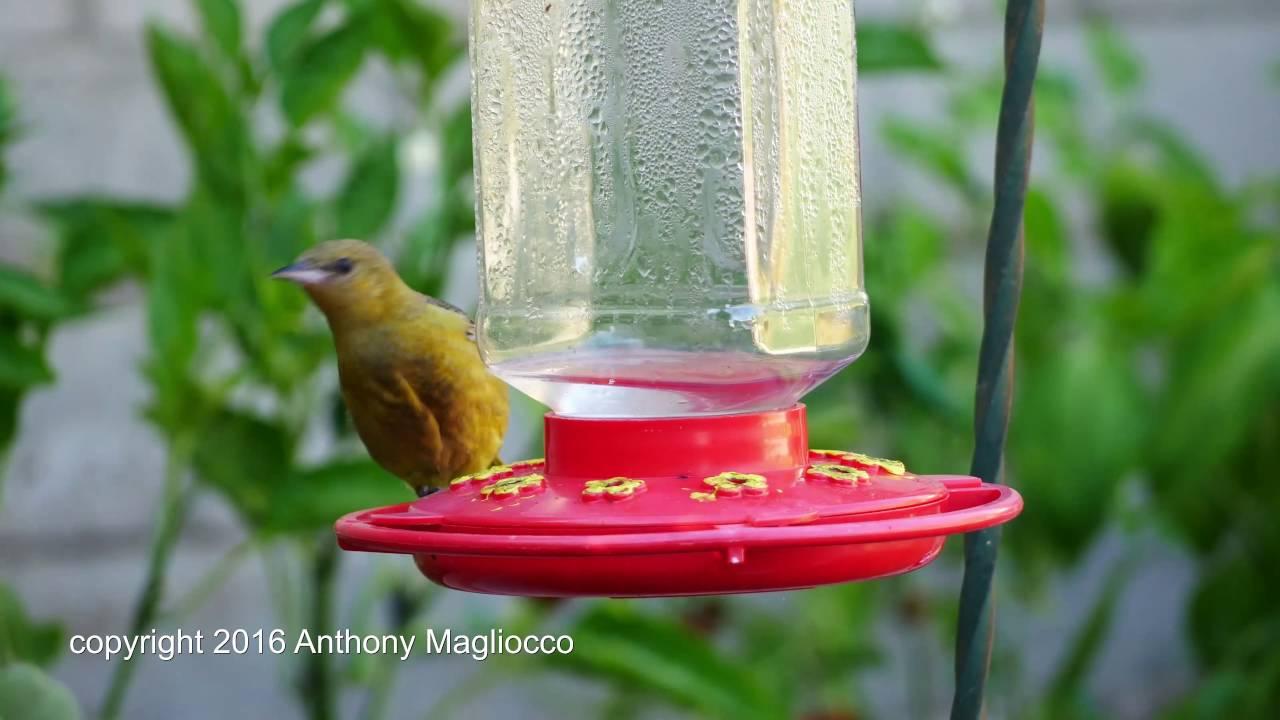 charming feeder for bird image full hummingbird yellow