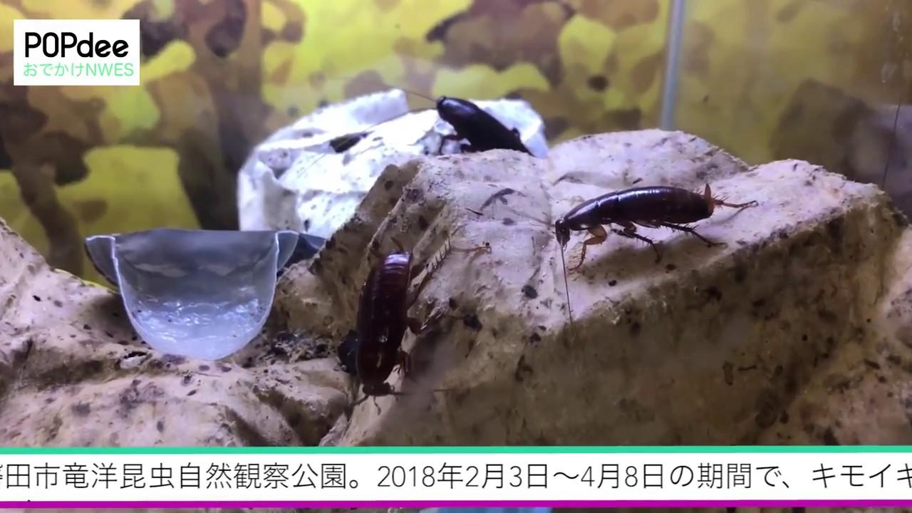 竜洋 昆虫 自然 観察 公園