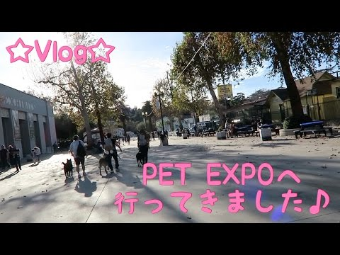 ☆Vlog☆PET EXPOへ行ってきました♪