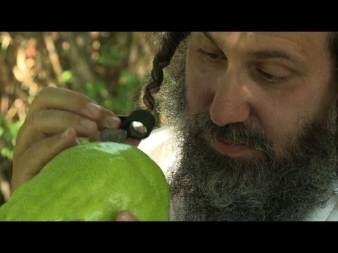 Italian farmers cultivate an ancient Jewish tradition