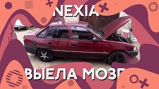 Daewoo Nexia / Оживление мертвеца / Решили проблему спустя неделю