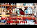 Masteran Burung Kolibri Ninja Konin Dan Burung Madu   Mp3 - Mp4 Download